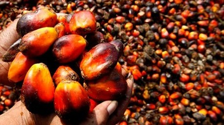 What's wrong with Palm Oil - An Apple a Day