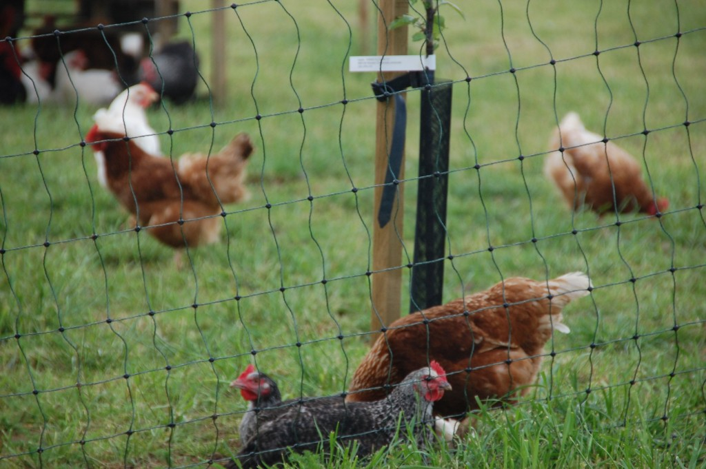 Organic Farming - An Apple a Day