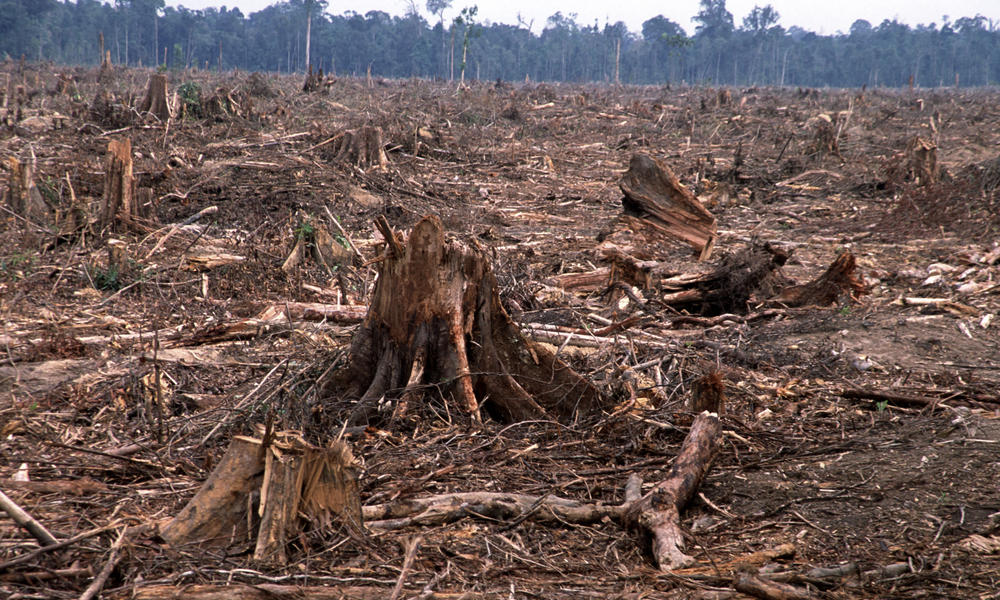Deforestation of Sumatra Palm Oil