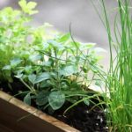 6 Herbs You Should Grow in Your Garden