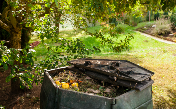 How we cut our garbage in half - An Apple a Day